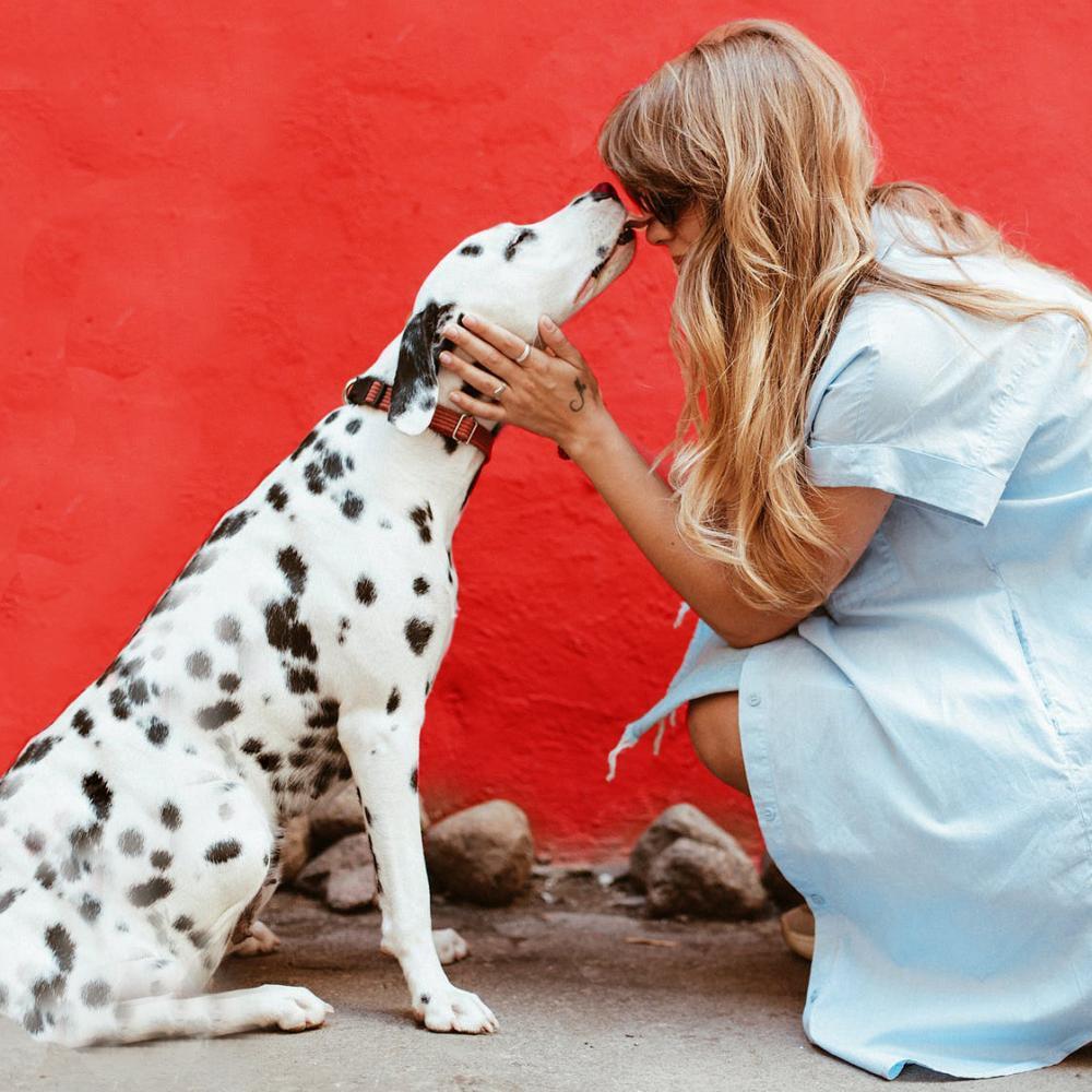 Met de hond op reis - 6 onmisbare tips
